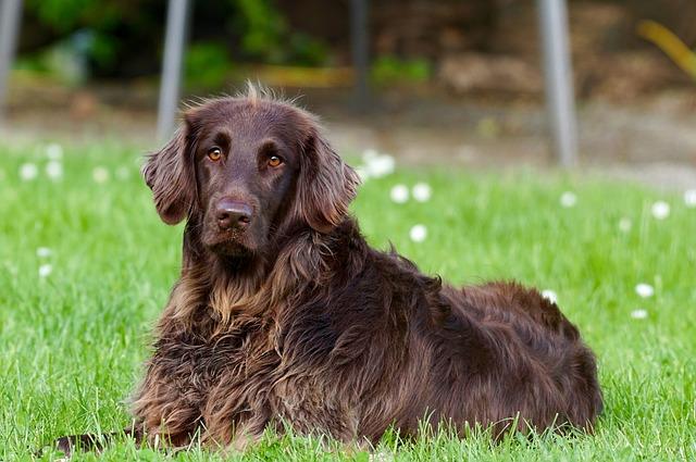 איך ניתן לשמר את טוהר הגזע של הכלב?