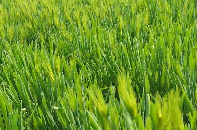 מכסחת דשא חשמלית VS נטענת