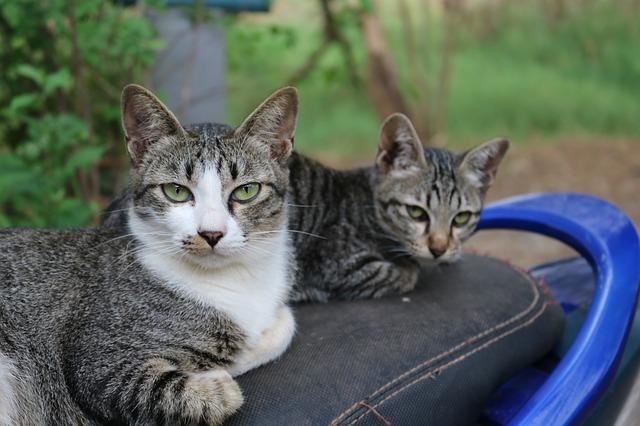 אוכל וחול מומלצים לחתולים